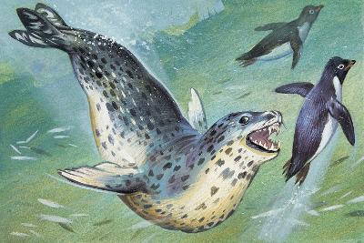Close-Up of a Leopard Seal Hunting a Penguin (Hydrurga Leptonyx)--Giclee Print