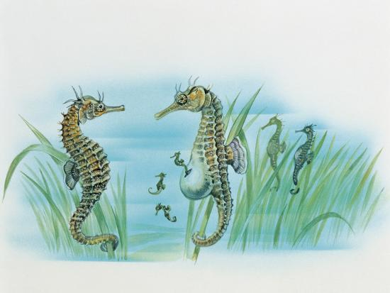 Close-Up of a Male Sea Horse Expelling Young Sea Horses--Photographic Print