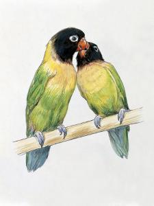 Close-Up of a Pair of Masked Lovebirds Perching on a Branch