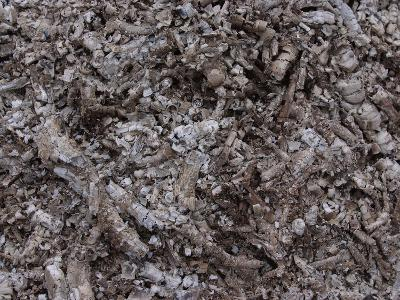 Close-up of a Pile of Cool Gray Ashes--Photographic Print