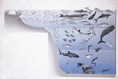 https://imgc.artprintimages.com/img/print/close-up-of-a-school-of-fish-underwater_u-l-pveakz0.jpg?p=0