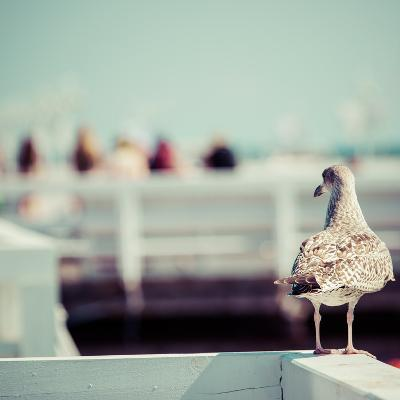 Close-Up of a Seagull in Sopot Pier, Gdansk with the Baltic Sea in the Background, Poland 2013.- Curioso-Photographic Print