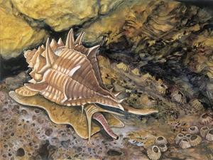 Close-Up of a Snail Underwater (Haustellum Brandaris)