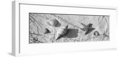 Close-Up of a Starfish and Seashells on the Beach, Dauphin Island, Alabama, USA