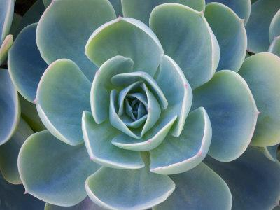 https://imgc.artprintimages.com/img/print/close-up-of-a-succulent-plant_u-l-q1gdlzt0.jpg?p=0
