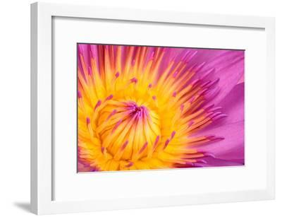 Close Up of a Water Lily Flower, Nymphaeaceae Family-Joe Petersburger-Framed Photographic Print