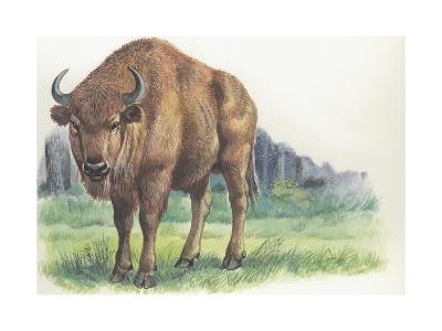 Close-Up of a Wisent Standing in the Forest (Bison Bonasus)--Giclee Print