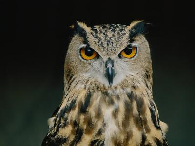 Close up of an African Eagle Owl-Joel Sartore-Photographic Print