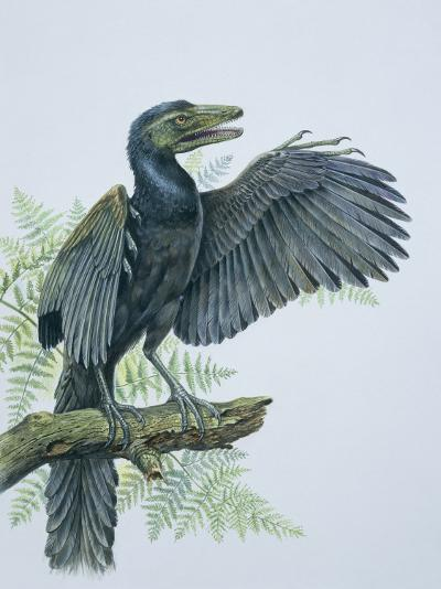Close-Up of an Archaeopteryx Perching on a Branch (Archaeopteryx Lithographica)--Photographic Print