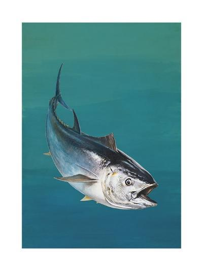 Close-Up of an Atlantic Bluefin Tuna (Thunnus Thynnus)--Giclee Print
