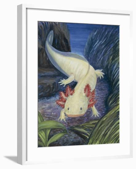 Close-Up of an Axolotl Underwater (Ambystoma Mexicanum)--Framed Photographic Print