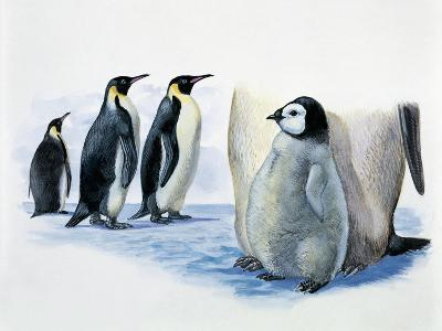 Close-Up of an Emperor Penguin with its Chick (Aptenodytes Forsteri)--Giclee Print