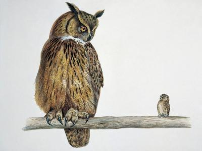 Close-Up of an Eurasian Eagle Owl (Bubo Bubo) Perching on a Branch with an Eurasian Pygmy Owl (Glau--Giclee Print