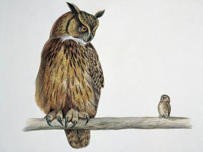 Close-Up of an Eurasian Eagle Owl (Bubo Bubo) Perching on a Branch with an Eurasian Pygmy Owl--Photographic Print