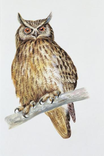 Close-Up of an Eurasian Eagle Owl Perching on the Branch (Bubo Bubo)--Giclee Print