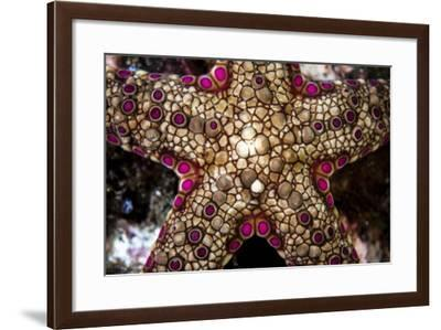 Close-Up of an Unidentified Sea Star in Indonesia-Stocktrek Images-Framed Photographic Print