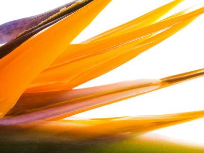 https://imgc.artprintimages.com/img/print/close-up-of-beautiful-blooming-flower_u-l-q10xaw00.jpg?p=0