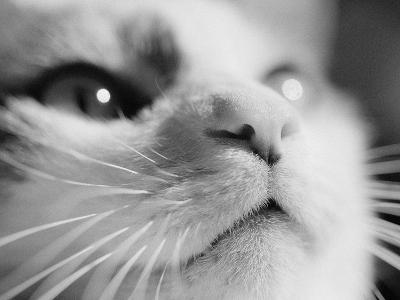 Close-up of Cat's Face-Henry Horenstein-Photographic Print
