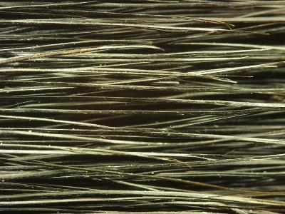 Close-up of Dark Paintbrush Bristles--Photographic Print
