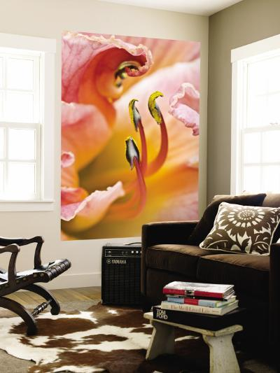 Close Up of Daylily, Savannah, Georgia, USA-Joanne Wells-Wall Mural