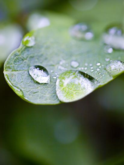 Close-Up of Dew Drops on a Leaf--Photographic Print