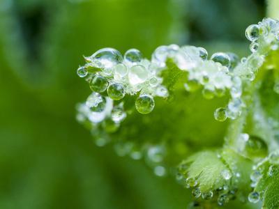 https://imgc.artprintimages.com/img/print/close-up-of-dewdrops-on-a-green-leaf-in-a-garden_u-l-q1gtj0u0.jpg?p=0