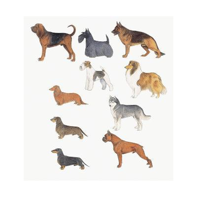 Close-Up of Dogs of Various Breeds--Giclee Print