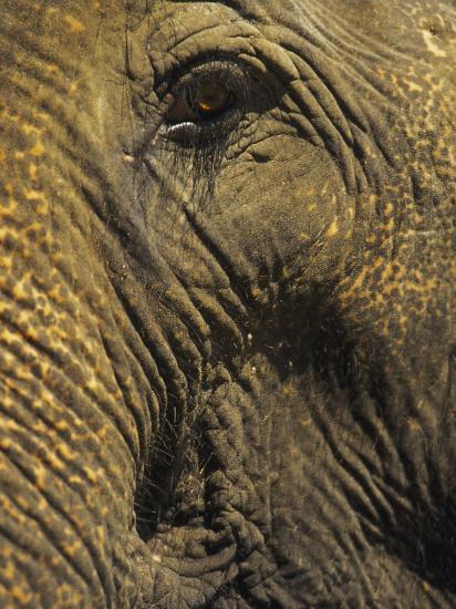 Close-up of Elephant, Thailand-Yvette Cardozo-Photographic Print