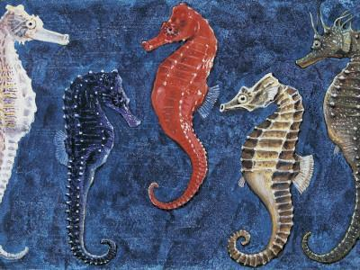 Close-Up of Five Seahorses Side by Side (Hippocampus Guttulatus)--Photographic Print