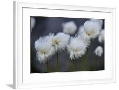 Close Up of Flowers Gone to Seed-Keith Ladzinski-Framed Photographic Print
