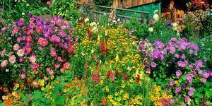 Close-up of flowers, Muren, Switzerland