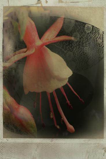 Close Up of Flowers-Mia Friedrich-Photographic Print