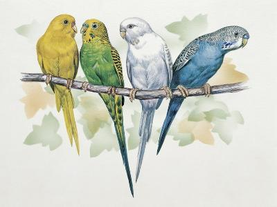 Close-Up of Four Parrots Perching on a Branch (Melopsittacus Undulatus)--Giclee Print