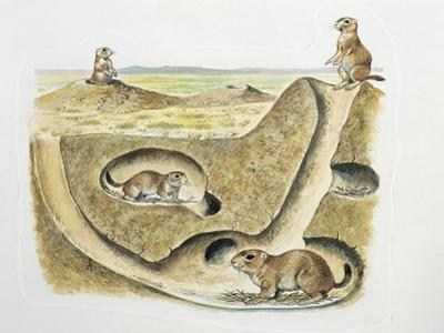 Close-Up of Four Prairie Dogs (Cynomys Ludovicianus)