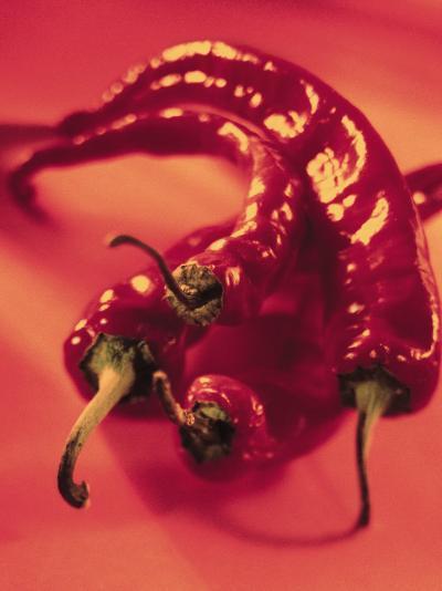 Close-Up of Fresh and Hot Chili--Photographic Print
