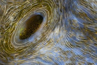 Close-Up of Great Clam Mantle-Reinhard Dirscherl-Photographic Print