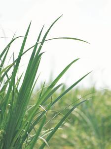 Close-up of Green Blades of Grass