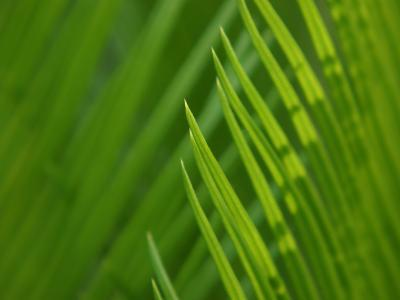 Close-Up of Green Leaves Staying Still in Nature--Photographic Print
