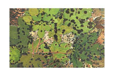 Close-Up of Green Leaves with Spots of Black Rot--Art Print