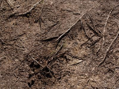 Close-Up of Ground with Dirt and Branches Creating a Textured Surface in France--Photographic Print
