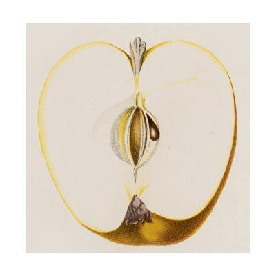 Close-Up of Half of Apple--Art Print