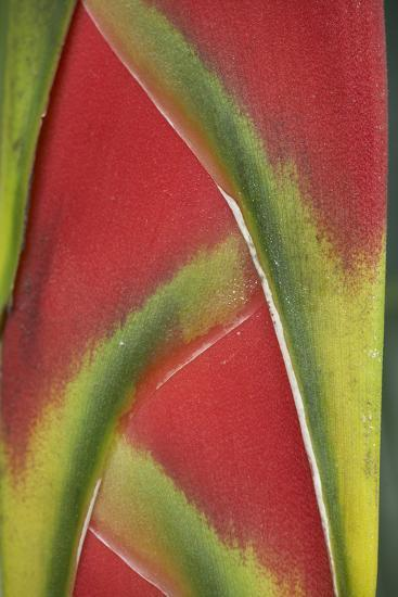 Close-Up of Heliconia, Costa Rica-Tim Fitzharris-Photographic Print