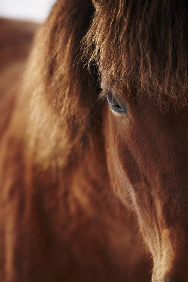 Close-Up of Horse Eye-Johner Images-Photographic Print