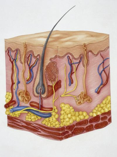 Close-Up of Human Skin Structure--Photographic Print
