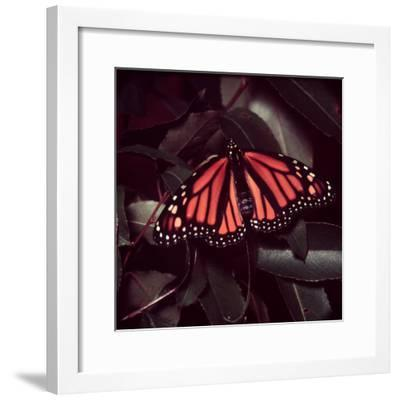 Close-Up of Monarch Butterfly-Andreas Feininger-Framed Photographic Print