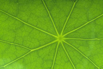 https://imgc.artprintimages.com/img/print/close-up-of-nasturtium-leaf_u-l-pzrgsn0.jpg?p=0
