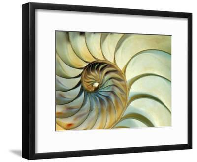 Close-up of Nautilus Shell Spirals-Ellen Kamp-Framed Photographic Print