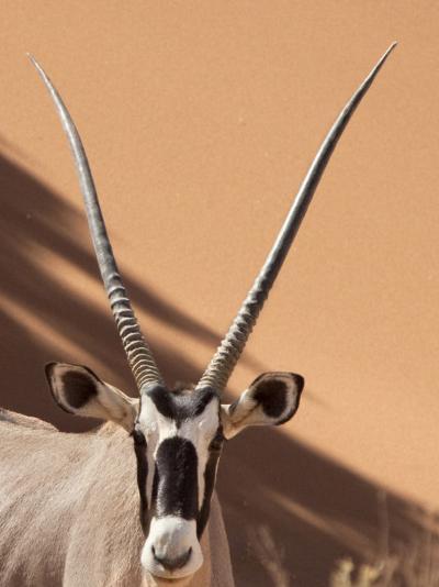 Close-Up of Oryx, Namib-Naukluft Park, Namibia, Africa-Wendy Kaveney-Photographic Print