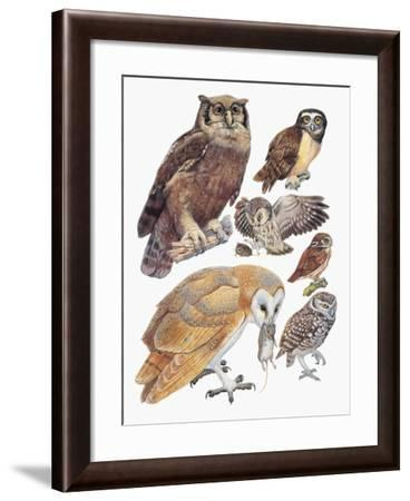 Close-Up of Owls--Framed Giclee Print