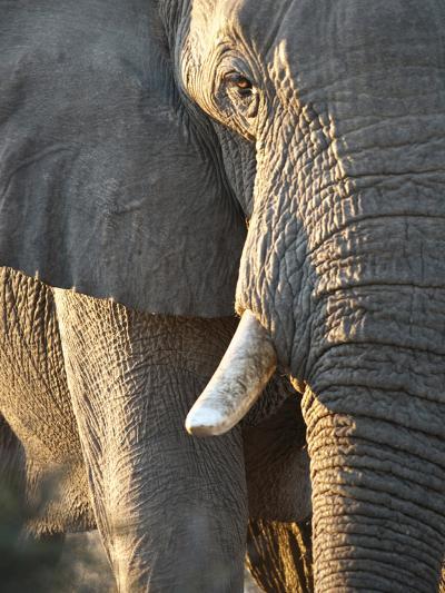 Close Up of Partial Face, African Elephant (Loxodonta Africana), Etosha National Park, Namibia-Kim Walker-Photographic Print